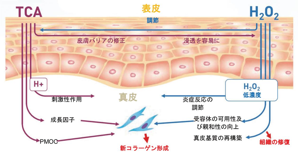 コラーゲンマッサージピールのメカニズム